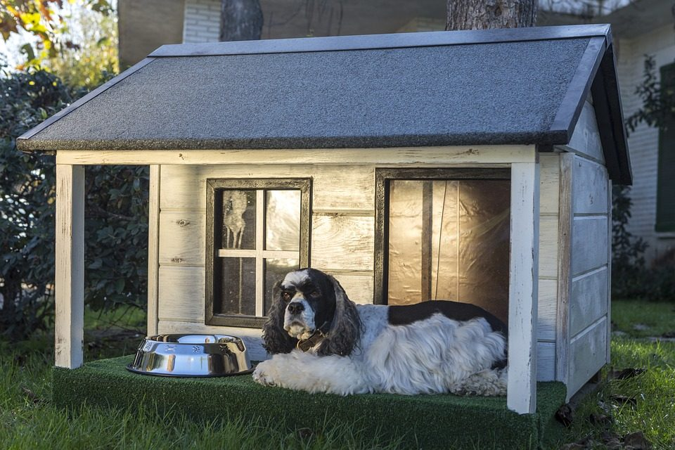 Dog House for Large Breeds - Post Thumbnail